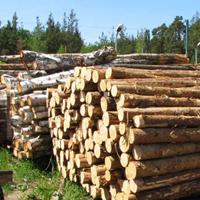 Как работать с лесом и не получить штраф до 200 000 рублей?